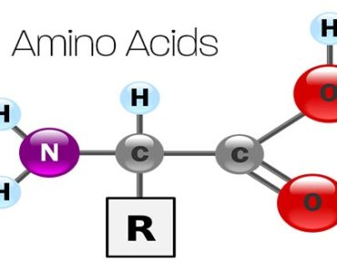 Amino Acid Sources