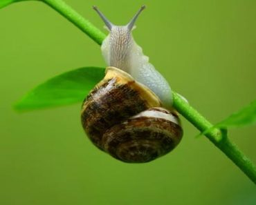 Snail Masks