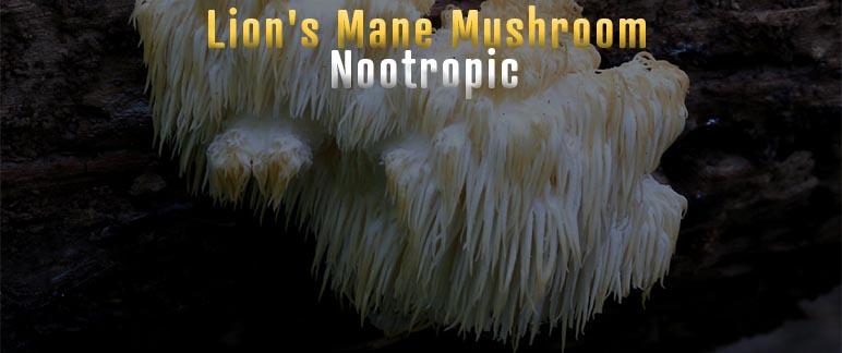 Lion's Mane Mushroom Nootropic